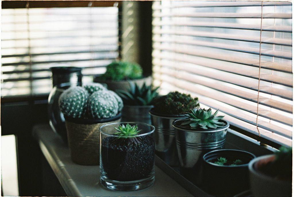 kaktusi i sukulente, biljke tokom zime