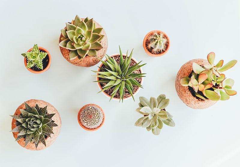 novogodisnji pokloni - biljka
