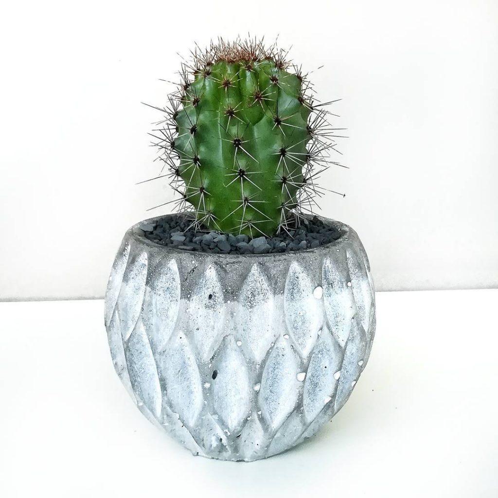 sobne biljke kaktusi