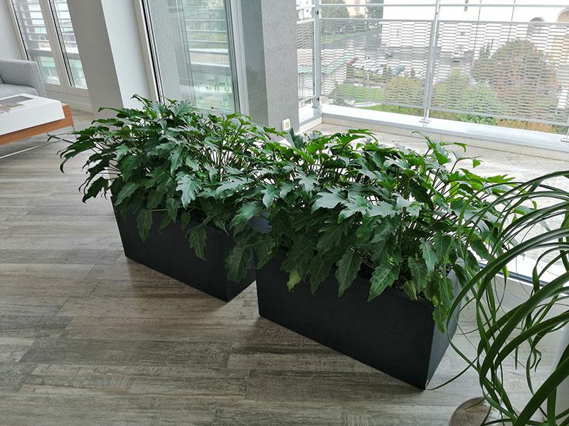 kancelarijske biljke za zardinjere