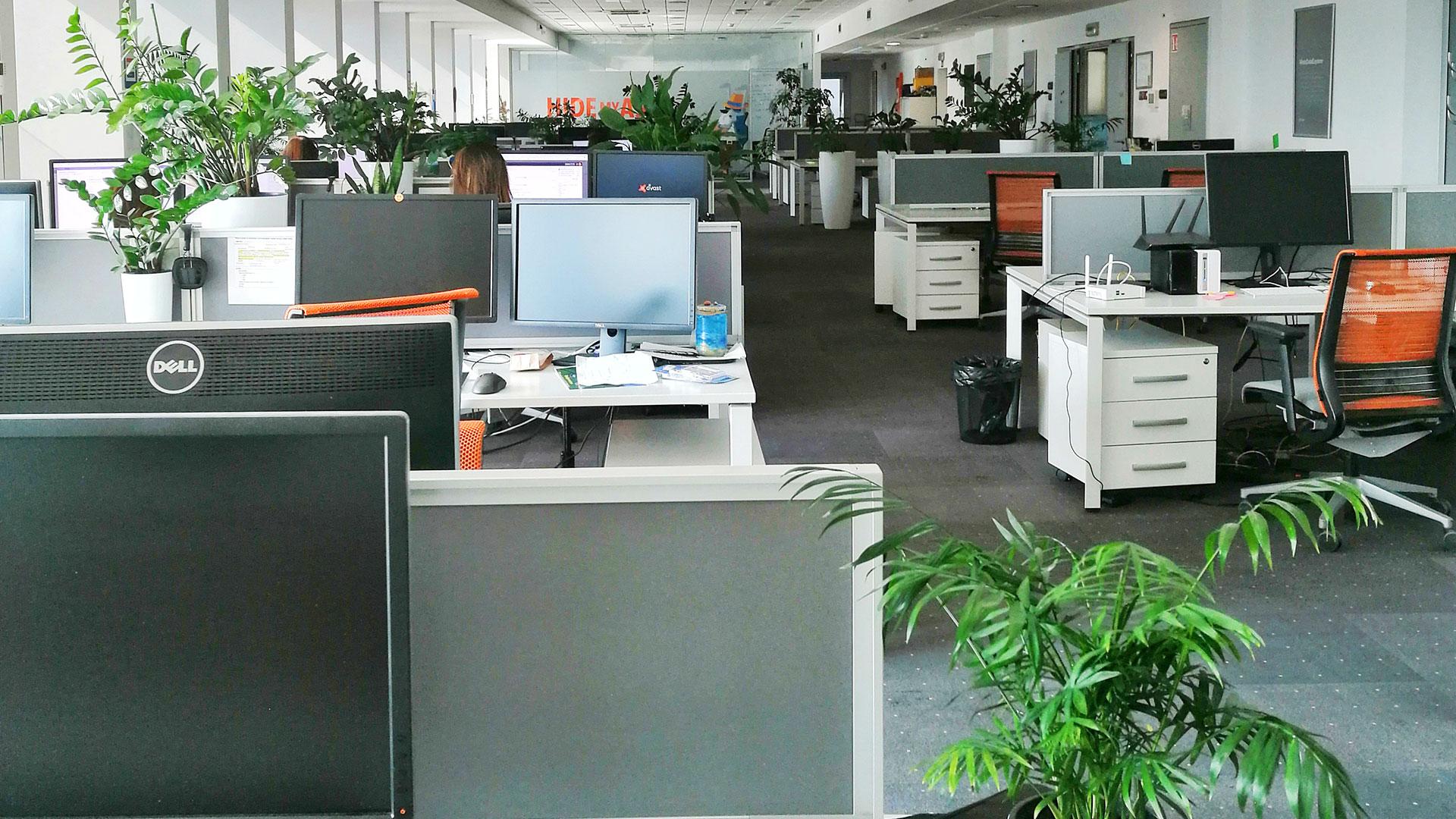 kancelarijske biljke