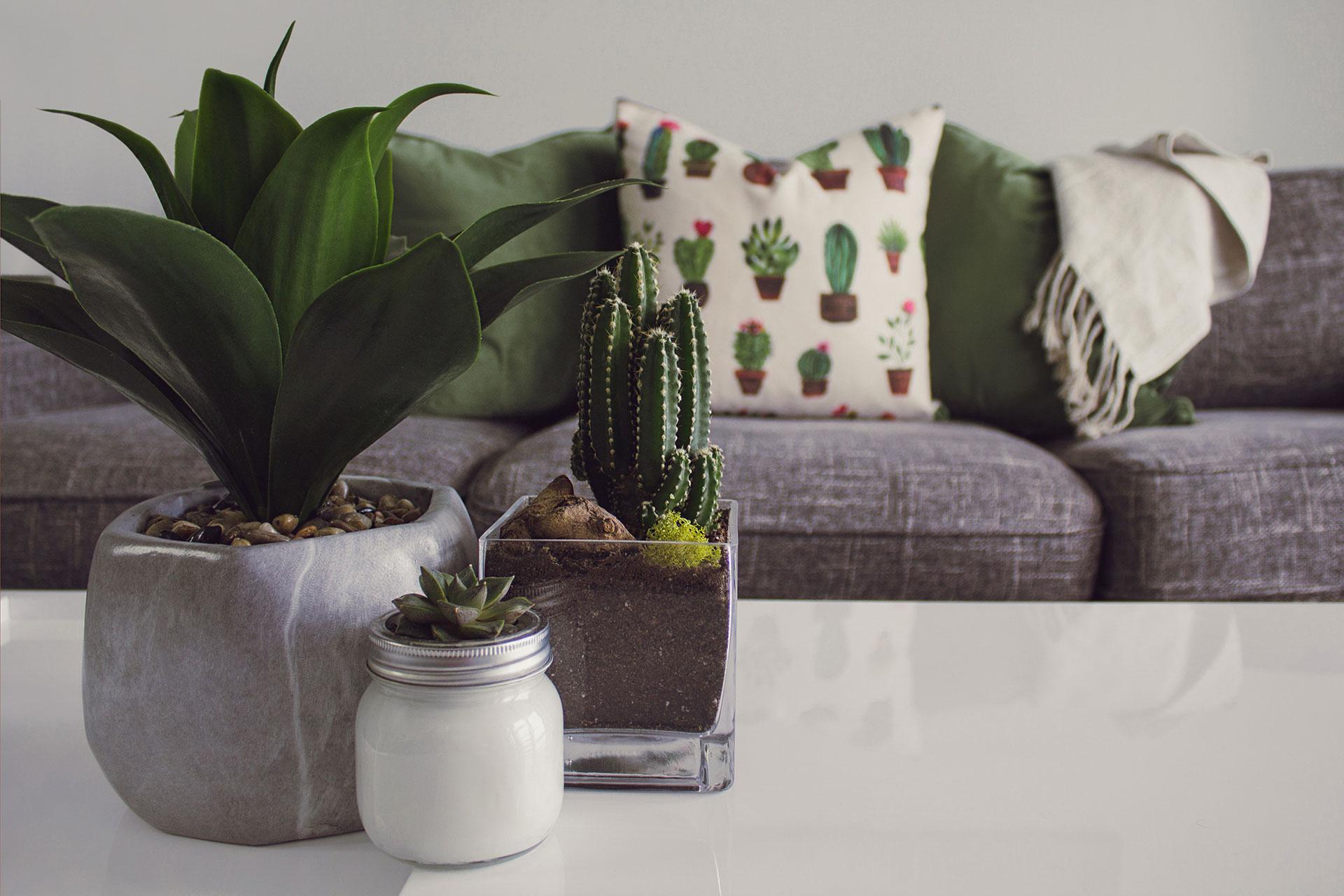 5 saveta za odrzavanje sobrinh biljaka