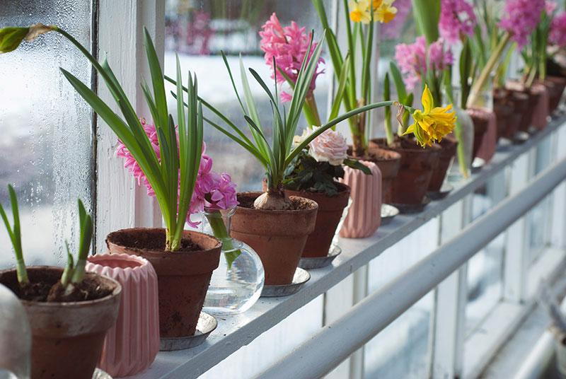 odgovarajuce mesto - održavanje sobnih biljaka
