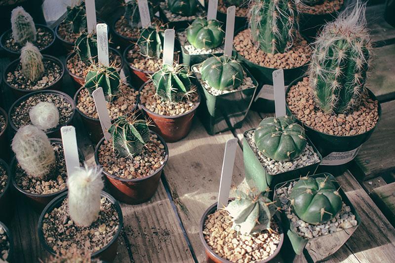 informisite se - održavanje sobnih biljaka