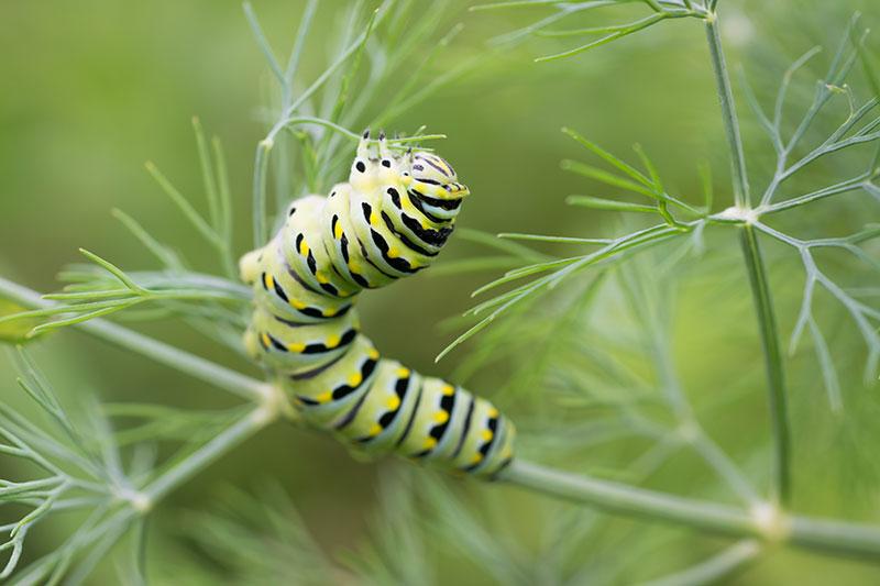 štetočine - održavanje sobnih biljaka