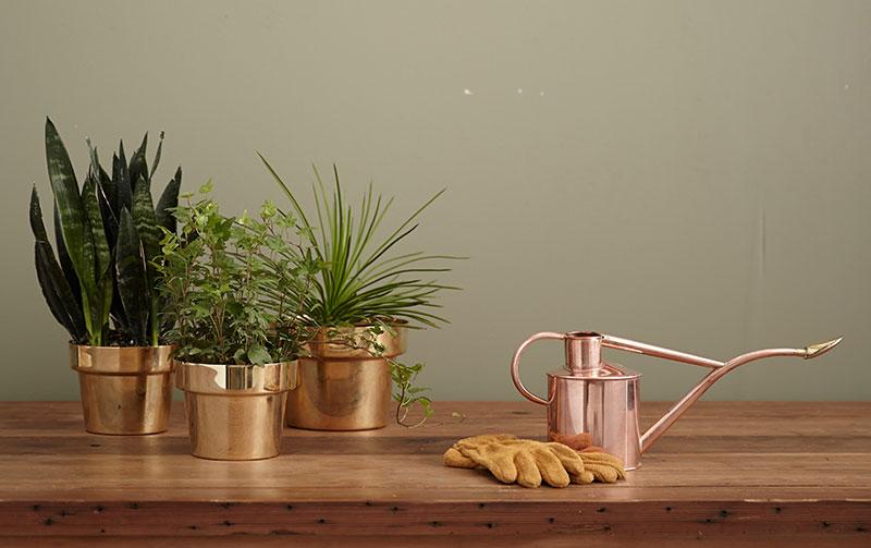 zalivanje - održavanje sobnih biljaka